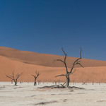 Sand Dunes and silhouettes in Namibia