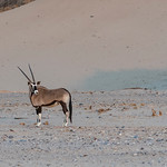 Gemsbok at Hoanib Riverbed in Namibia
