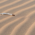 Feather and patterns on Sand Dunes in Namibia